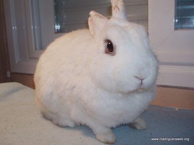 Heraclio conejo en adopción