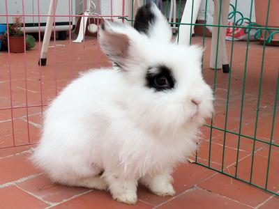 Uli conejo en adopción
