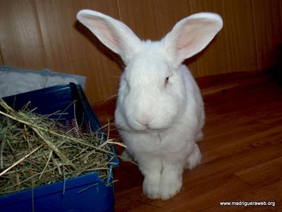 Luisma conejo en adopción