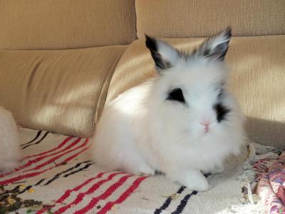 Conejo adopción leo